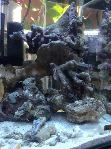 rote algen meerwasser entfernen